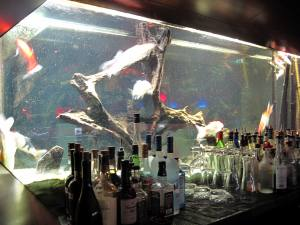 Aquarium hinter der Bar im Vertigo Club in Zürich